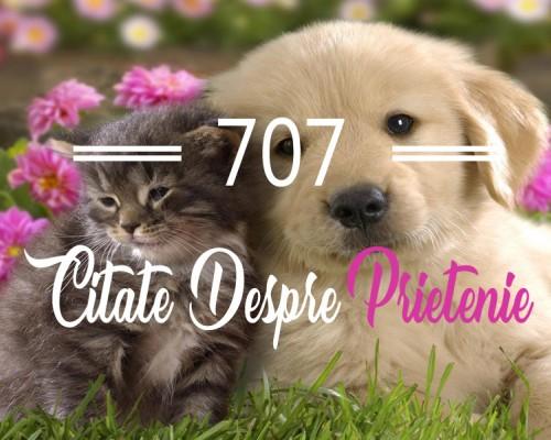 707 Citate despre prietenie pe care sa le dedici celui mai bun prieten